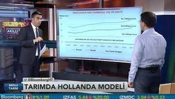 """Hollanda'nın tarımdaki başarısında """"altın üçgen"""" yaklaşımı"""