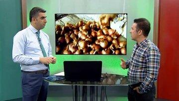 Prof. Dr. Turan: Organik tarım moda değil gereklilik
