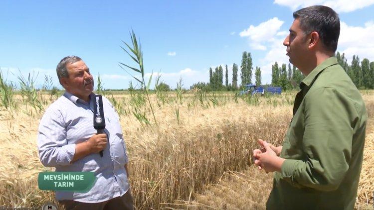 Buğday üretiminde girdi ve fiyat sorunu