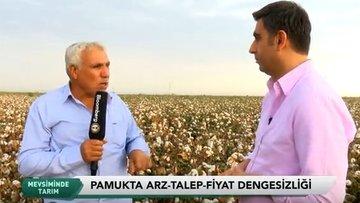 Şanlıurfa'da pamuk hasadı - Mevsiminde Tarım