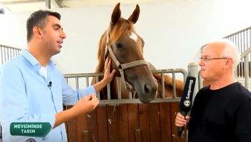 Türkiye'nin at ve eşek çiftlikleri