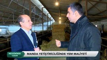 Türkiye'de manda yetiştiriciliği