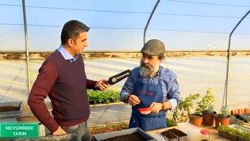 Solucan gübresi ve atalık tohumlarla tarım