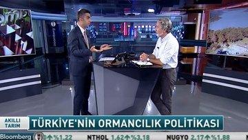 Türkiye'nin ormancılık politikası