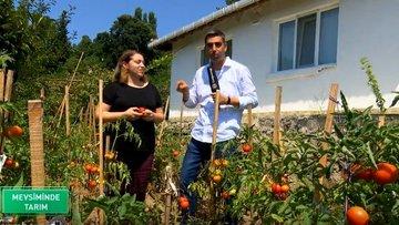 Üsküdar'da mahalle sakinleri kent bahçelerinde tarımsal üretim yapıyor
