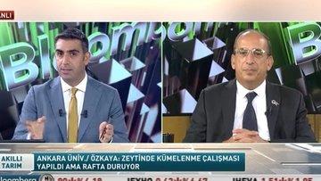Türkiye'de zeytincilik ve zeytinyağı sektörü