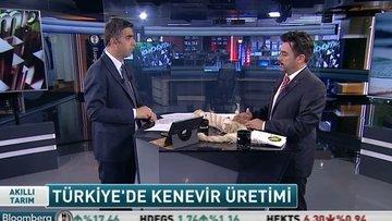 Türkiye'de kenevir üretimi ve ekonomisi