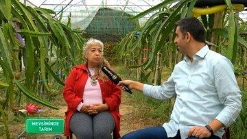 Türkiye'de ejder meyvesi, avokado ve kamkat üretimi