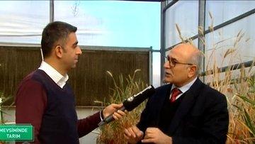 Buğdaydan nohuta Anadolu'nun gen kaynakları