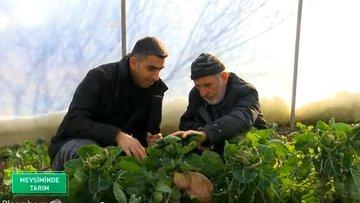 Atalık tohumlarla sebze ve meyve üretimi