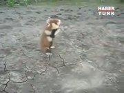 Kung-fu ustası hamster!