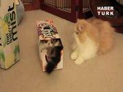 Sevimli kedilerin kutu oyunu!