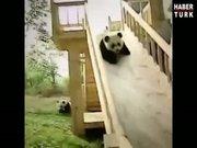 Böyle sevimli pandalar görülmedi