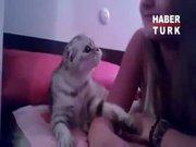 Çapkın kedi