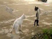 Karate yapan kedi