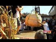 Dünyanın en ağır bal kabağı: 1 ton!
