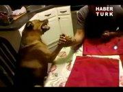 Bilek güreşi yapan köpek