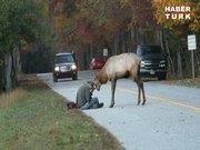 Fotoğrafçının geyikle imtihanı