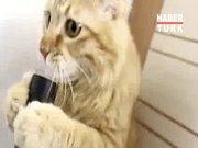 Elektrik süpürgesi yalayan kedi