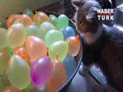 Su balonu patlatan kedi