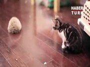 Kirpiyle tanışan kedicik