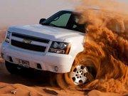 Katar'da safari, petrol kadar kıymetli