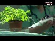 Bitkiler tehlike hissedince ne yapar?