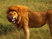 Üzerine gelen aslanı son saniyede vurdu!