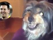 Barcelona'dan nefret eden köpek