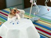 Dürüm yiyen hamster