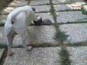 Kaplumbağa ve köpeğin ilginç top kavgası!