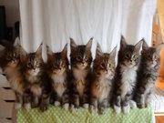 Yavru kedilerin inanılmaz gösterisi