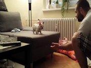 Atlamaktan korkan yavru köpek