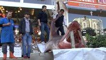1,5 ton ağırlığında 'köpekbalığı'
