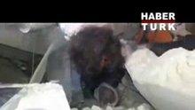 IŞİD komutanı böyle yakalandı