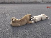 Araba çarpan köpeğe dostu yetişti