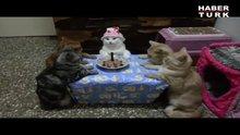 Kedinin doğum günü partisi