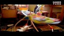 Beşik sallayan kedi