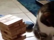 Jenga oynayan kedi