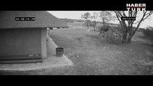 Çöp toplayan duyarlı fil