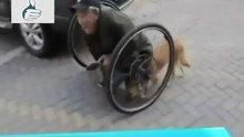 Yaşam Mücadelesi Veren Adamın Sadık Köpeği