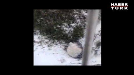 Pandanın kar keyfi!