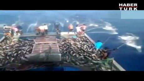 Böyle balık tutma görmediniz!