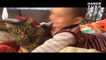 Minik Ayşenin kedi sevinci