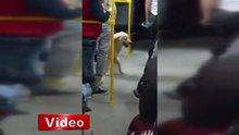 Sokak köpeğinin toplu taşıma keyfi