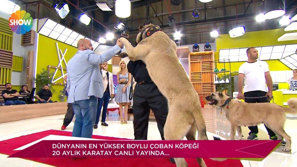 Dünyanın ve Türkiye'nin Rekortmen Köpekleri / Her Şey Dahil