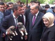 Erdoğan'a Aksaray Malaklısı iki yavru köpek hediye edildi