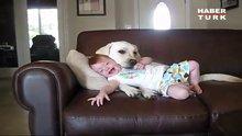 Köpek bebeği yaladı!