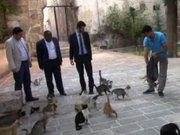 MHP milletvekili adayları sokaktaki kedileri topladı