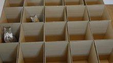 Kutu kutu kediler